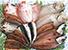 干物・紅鮭